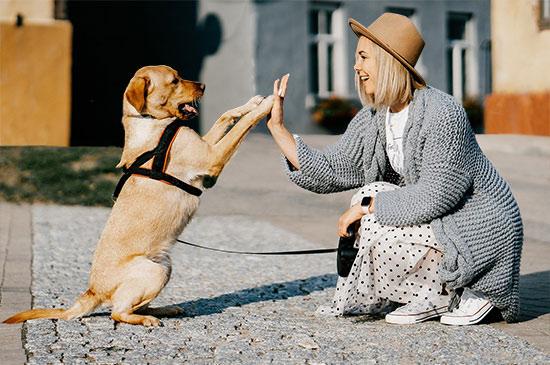 Entspannte Hundebegegnungen