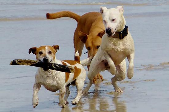 Entspannte Hunde-Begegnung mit Artgenossen - kinderleicht und problemlos
