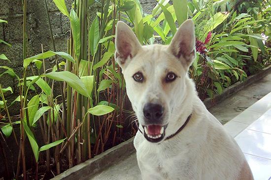 Wie ein aggressiver Strassenhund in Bali mein Leben veränderte