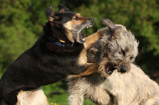 Aggressive Hunde - Was tun, wenn der Hund zubeisst?