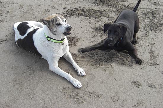 Hunde-Aggression zu Artgenossen erfolgreich beenden