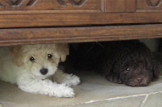 Hund hat Angst vor Lärm an Silvester
