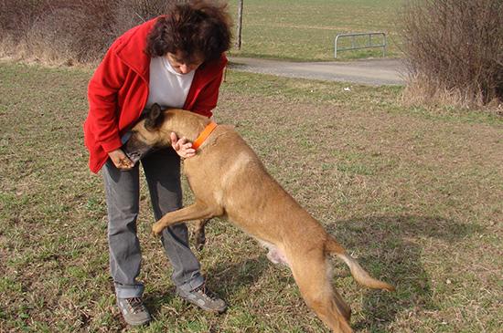 Bio-Energetik bei Hunden - damit die Energien wieder fliessen