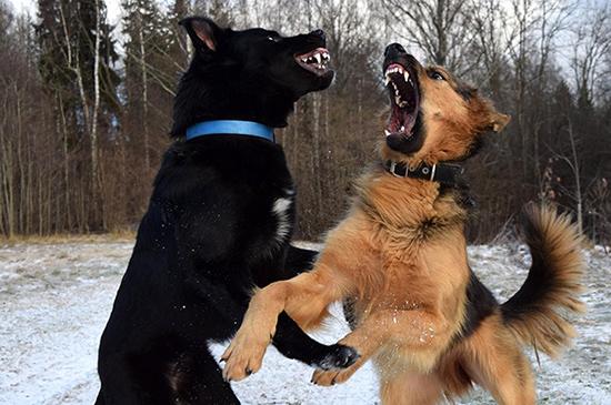 Aggressionen beim Hund erfolgreich abbauen