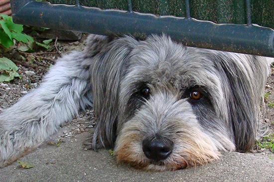 Nicht alleine bleiben - Trennungsangst beim Hund