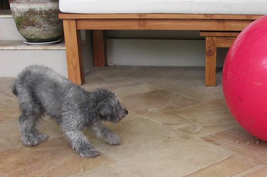 Hund hat Angst vor Objekten