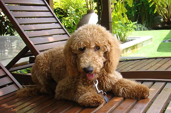 Artgerechtes Hundetraining