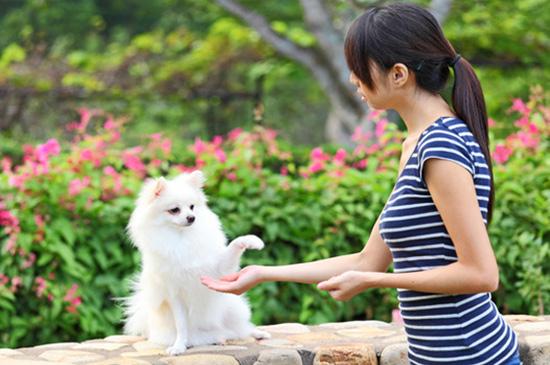 Hunde-Basistraining: Damit dein Hund deine Sprache versteht