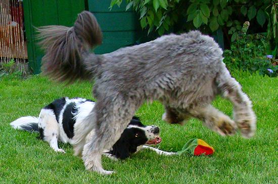 Wie du erkennst, ob Hunde spielen oder Stress abbauen