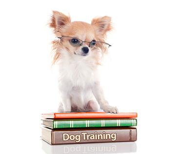 Wieviel Training brauchen Hunde?