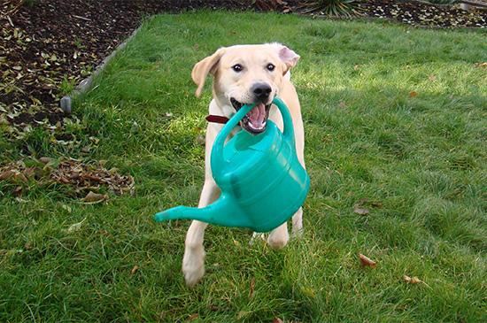 Hyperaktiv - Wenn Hunde nicht zur Ruhe kommen