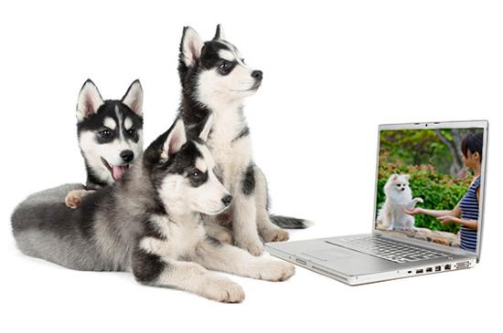 Online Hundetraining live