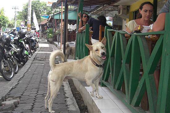 Erfahrungen im Verhalten von Strassenhunden, warum sind sie anders?