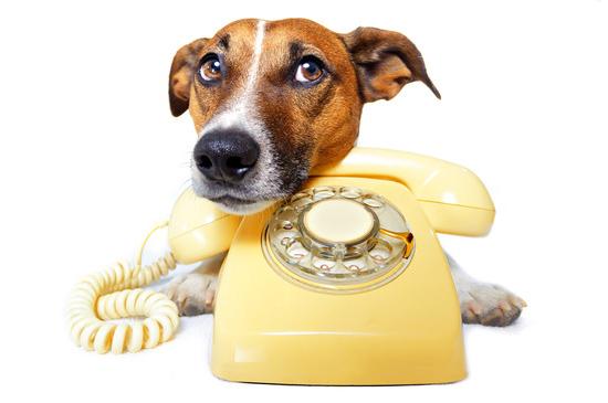 Telefonberatung bei Problemen mit dem Hund
