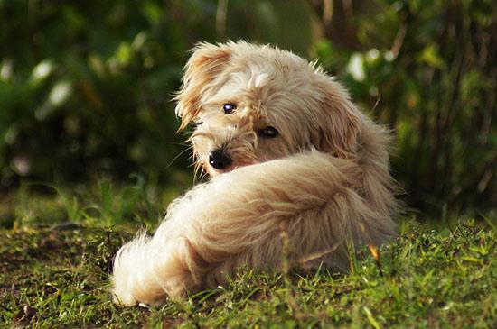 Hund hört nicht und folgt dir nicht mehr? Hier ist die Lösung.