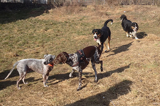 Gemeinsame Hundespaziergänge mit Artgenossen, wie sinnvoll sind sie?