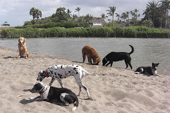 Wie du Hundebegegnungen ohne Stress hinbekommst