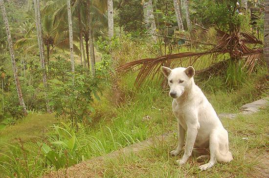 Meine 15 Jahre mit Strassenhunden - Tierschutz in Bali