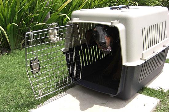 Hunde Welpen schnell an Hundebox - Transportbox gewöhnen